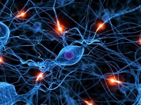 Brein Bevat Netwerk Van Snelwegen Eos Wetenschap
